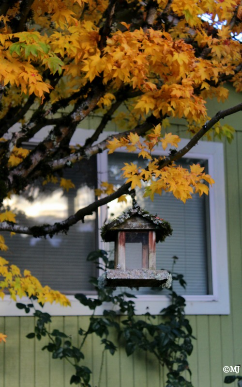 Bird feeder in the fall
