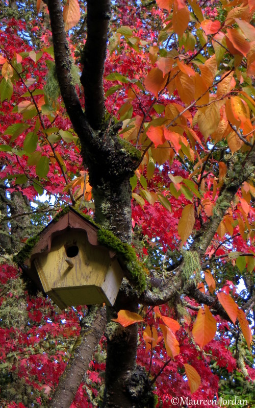 Birdhouse amidst the fall glory