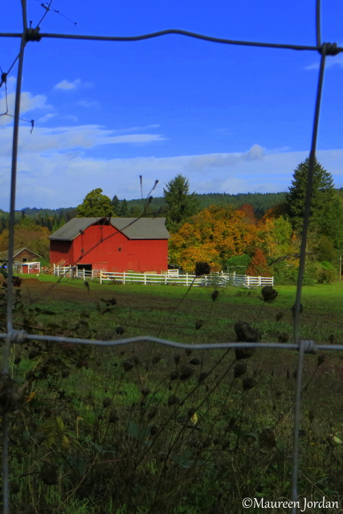 Red barn, West Linn, Oregon