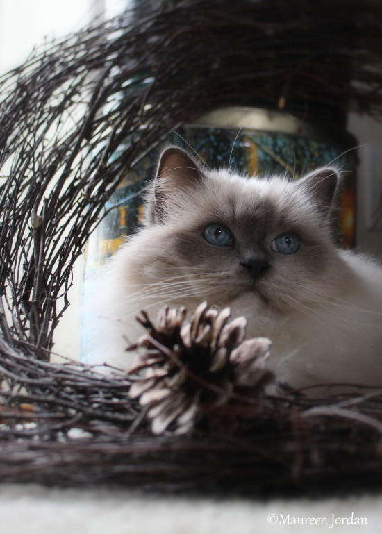 Cat in a rustic wreath