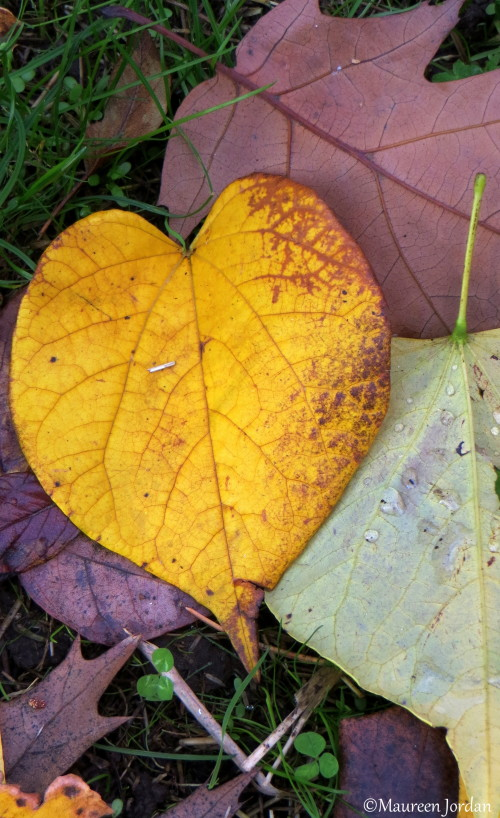 Yellow leaf heart