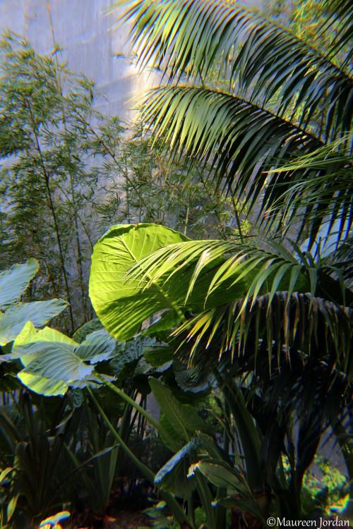 Tropical foilage