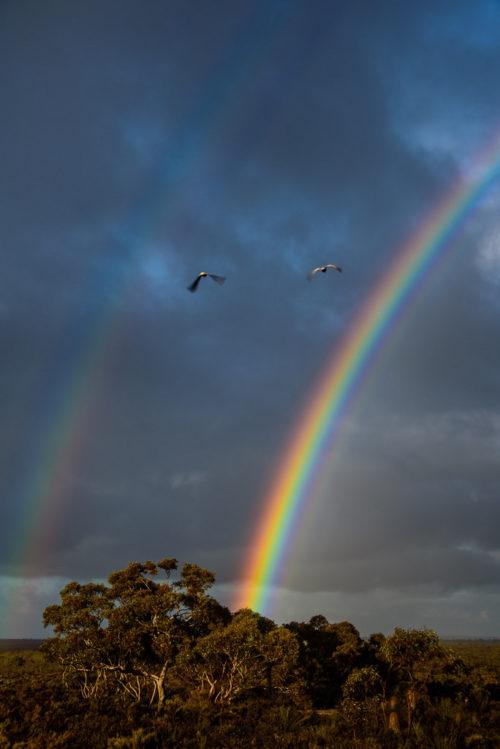 Doubles, Badgingarra, Western Australia