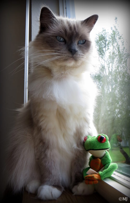 One day, Froggy made friends with some cats.