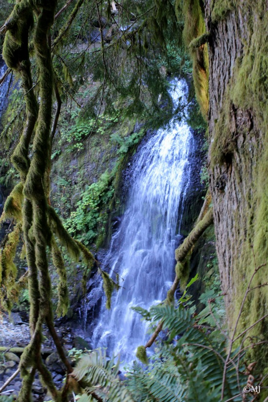 Upper McCord Creek Falls - through mossy branches