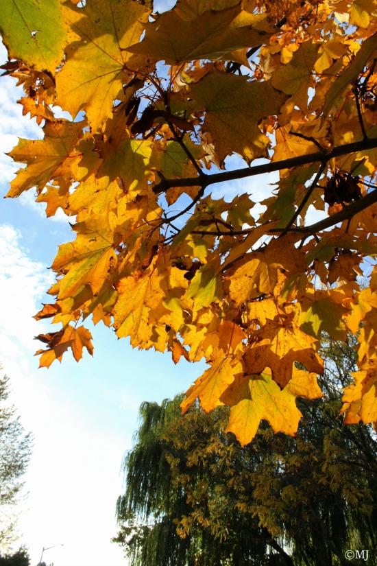 Autumns glow