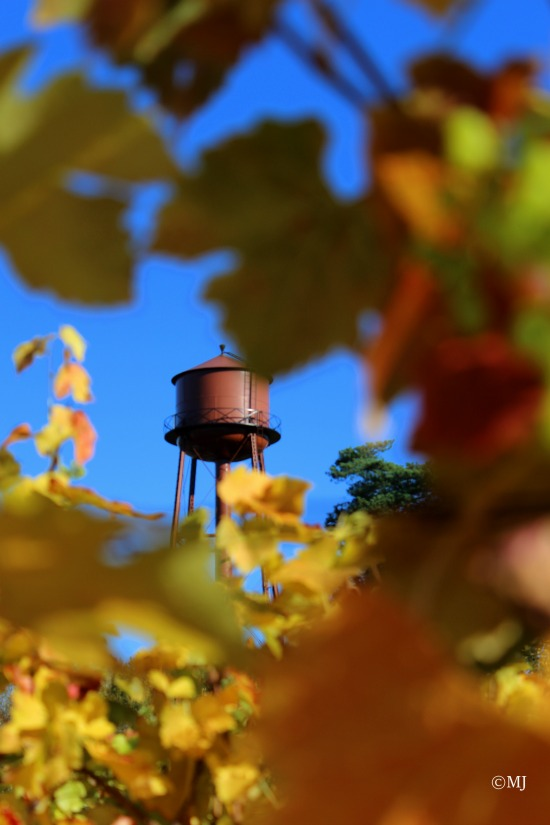 Edgefield water tower through the vines