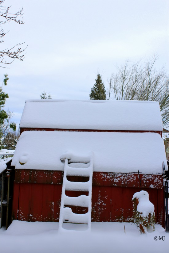 Snow covered ladder leaning against a tiny red shed