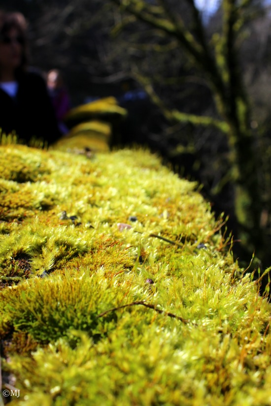 Moss on the bridge