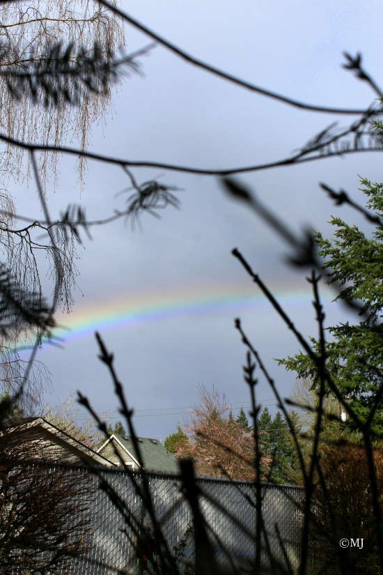 Rainbow through the trees