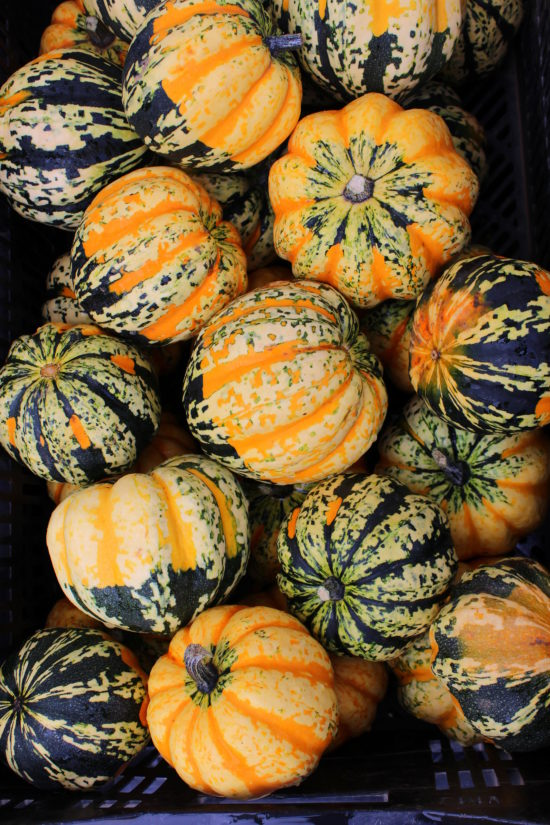 Green and orange striped mini pumpkins