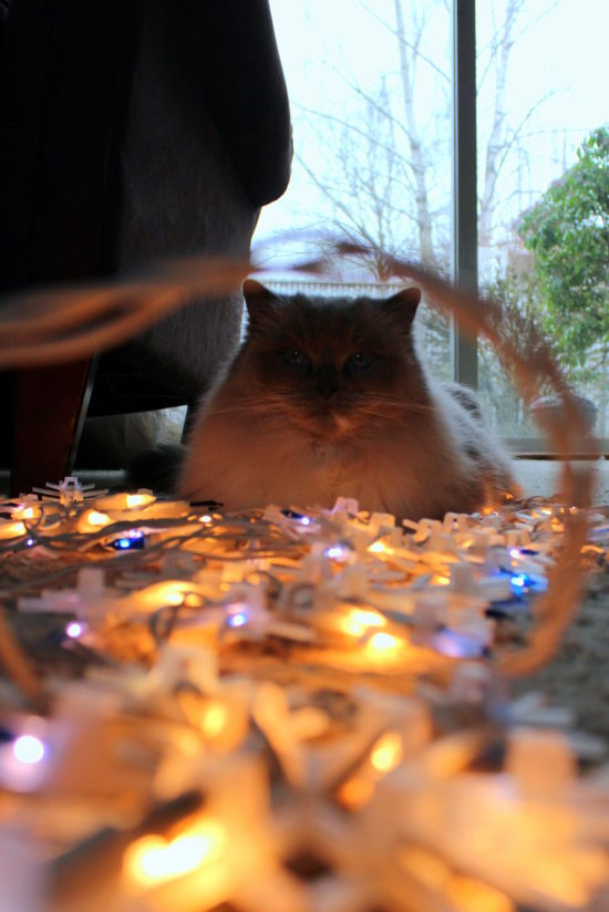Caught in the Christmas lights