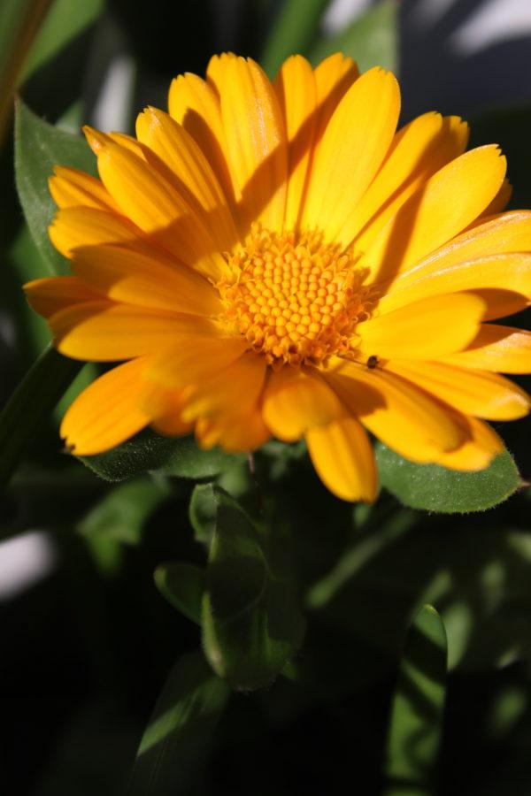 Orange/yellow wildflowers