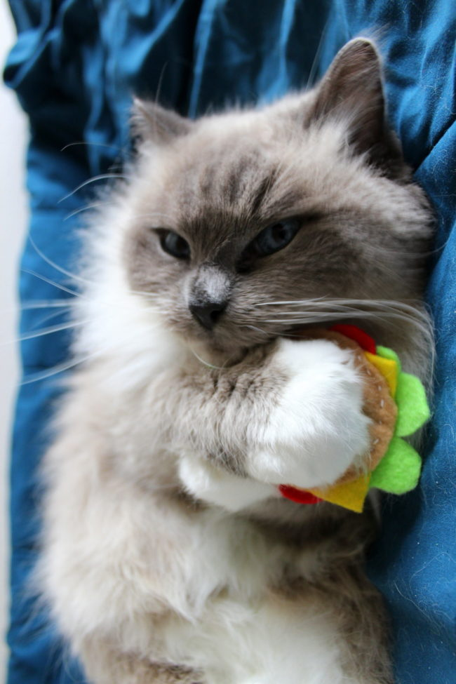 Iz mine! Hamburger nip toy