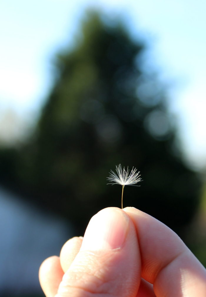 I hold in my hand a wish. A tiny spark of hope.